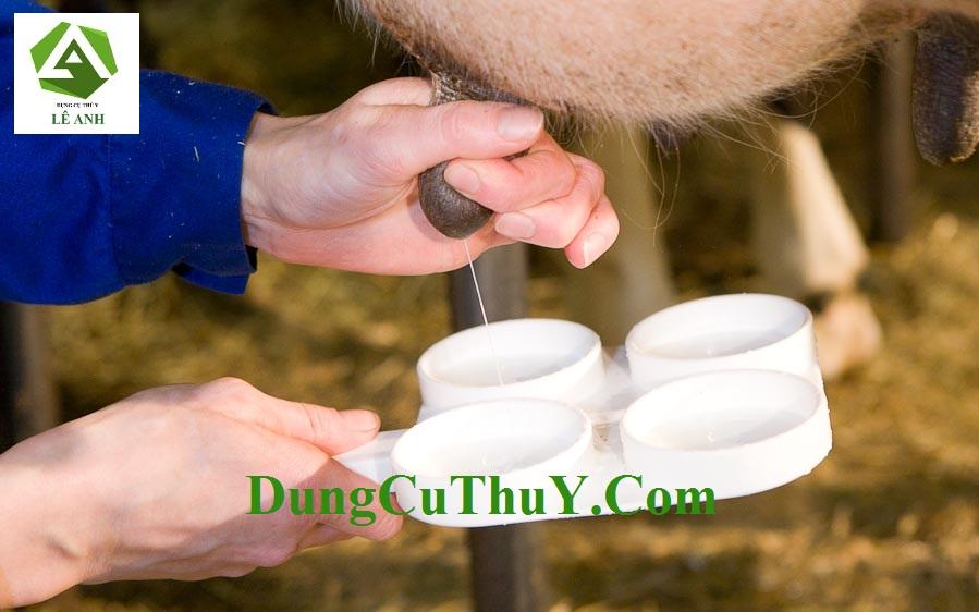 viêm vú ở bò sữa