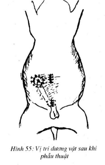 tài liệu ngoại khoa thú y