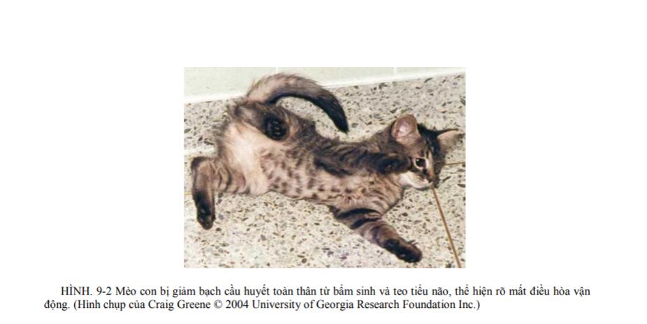 bệnh đường ở mèo