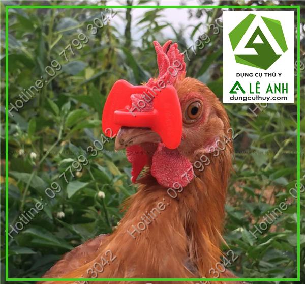 mắt kính cho gà