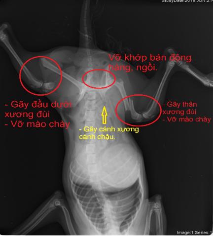 khung cắt tai chó