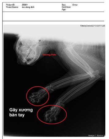 chuẩn đoán bệnh ở chó
