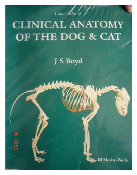 giải phẫu chó